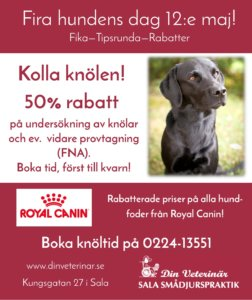 Vi firar hundens dag hos Din Veterinär i Sala den 12:e maj. Välkommen!